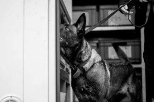 Defencetec Security, Diensthundewesen, Hunde, Spürhunde, Sicherheit, Münster